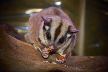 australian-wildlife-1675479
