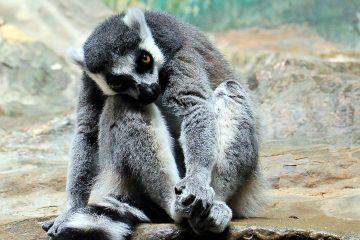 monkey-1646857
